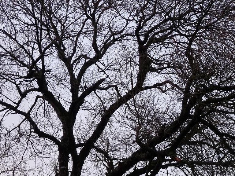 tree veins again