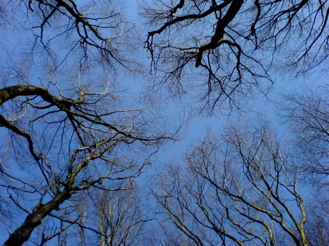 tree veins2 In The Trees (A cycle through Clarinbridge Woods)
