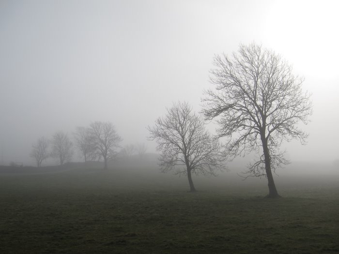 trees in a field in fog