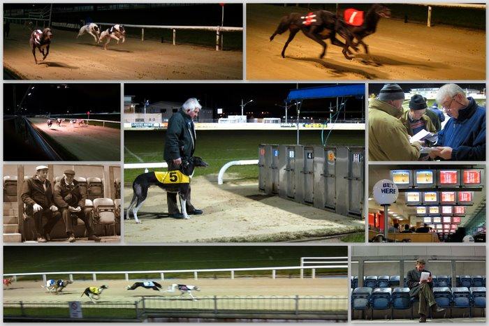 Greyhound racing at Galway
