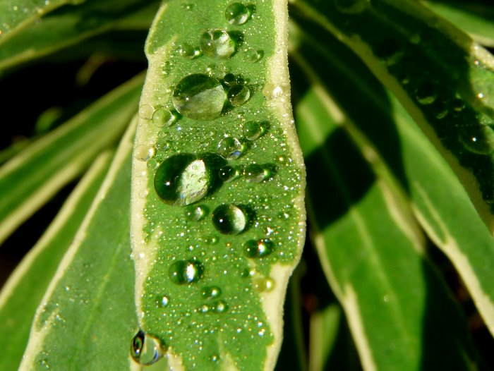 macro of water droplets on a leaf