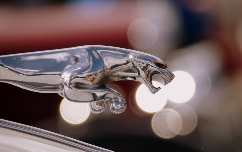 Jaguar Hood ornament jumping