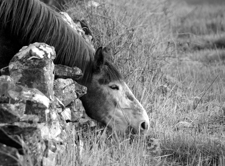 horse eating Horse outside