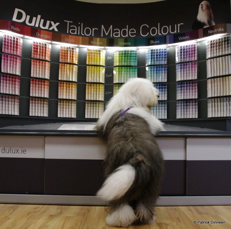 Dulux Dog 2