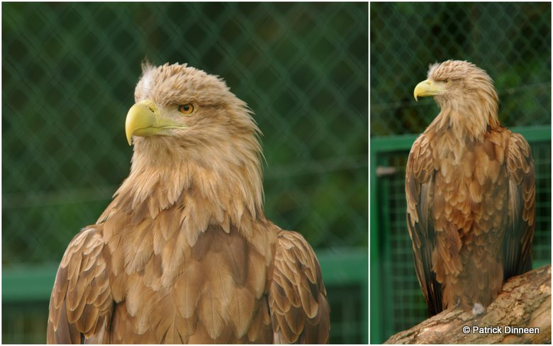 fota wildlife zoo eagle Wild, Wild Life