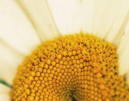 Floral & Macro