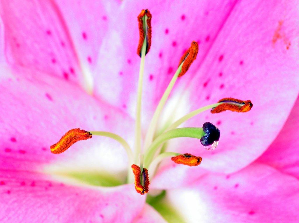 floral macro